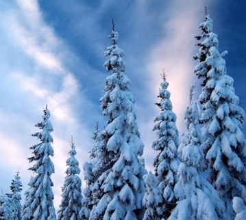 snow_covered_trees-normal